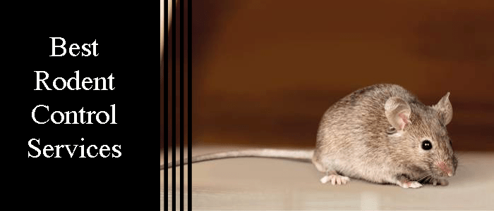 Best Rodent Control Services