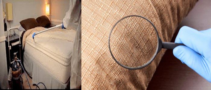 Professional Bed Bug Control Service
