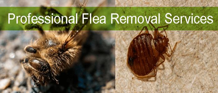 Professional Flea Removal Services